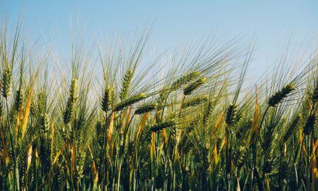 mahindra agri